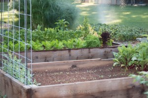 Redwood raised bed with beets