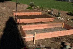 Redwood raised bed lined up